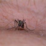 Alertă națională din cauza țânțarilor