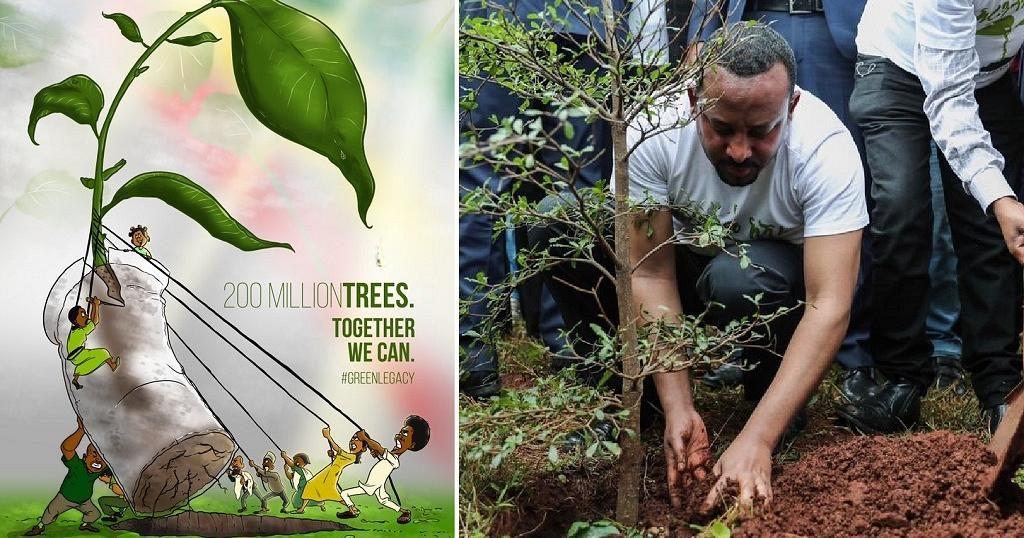 plantare de copaci in etiopia